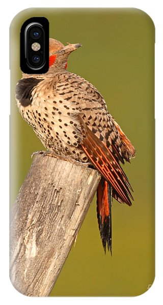 Northern Flicker iPhone Case - Northern Flicker Looking Back by Max Allen