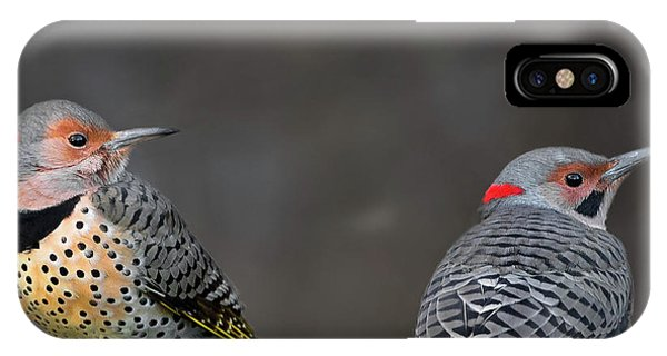 Northern Flicker iPhone Case - Northern Flickers Square by Bill Wakeley