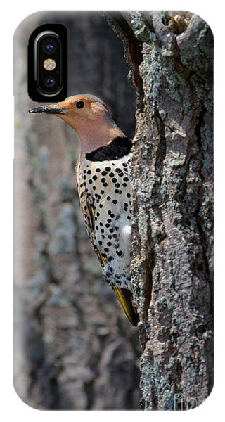 Northern Flicker iPhone Case - Northern Flickr by Todd Bielby