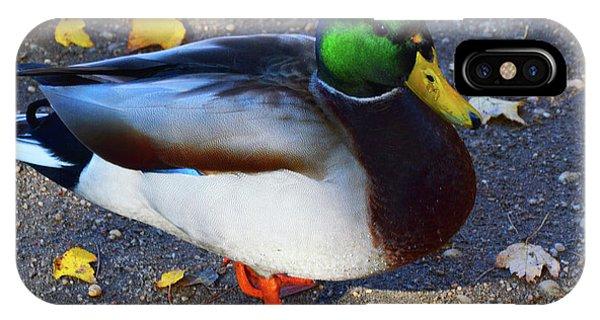 Northern Male Mallard Duck IPhone Case