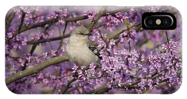Northern Mockingbird In Blooming Redbud Tree IPhone Case