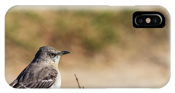 Northern Mockingbird Sitting On Top Of A Hedge IPhone Case