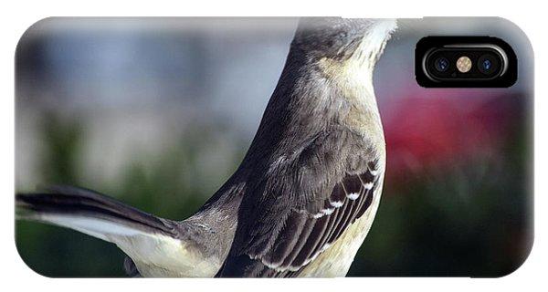 Northern Mockingbird Up Close IPhone Case
