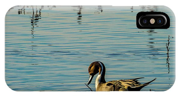 Northern Pintail At The Wetlands IPhone Case