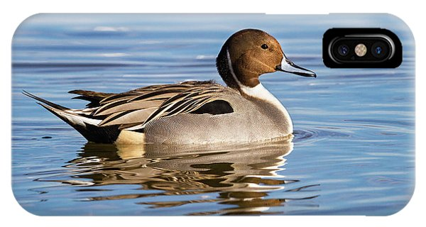 Northern Pintail Duck IPhone Case