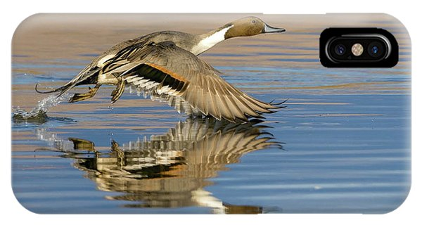 Northern Pintail With Reflection IPhone Case