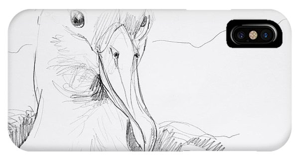 Northern Royal Albatross IPhone Case