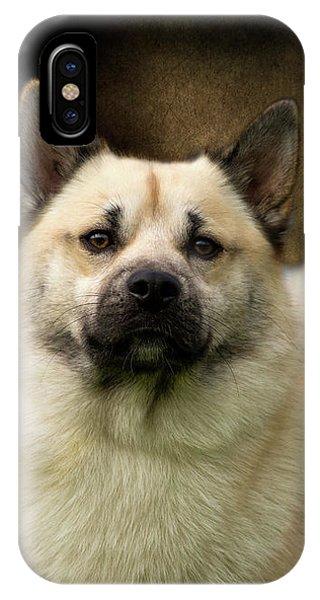 Norwegian Buhund IPhone Case