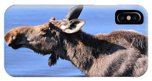 Nose First - Moose IPhone Case