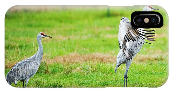 Sandhill Crane iPhone Case - Not Impressed by Mike Dawson