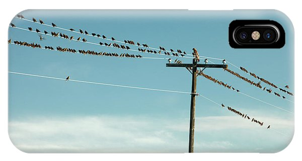 Starlings iPhone Case - Not Like The Others by Todd Klassy