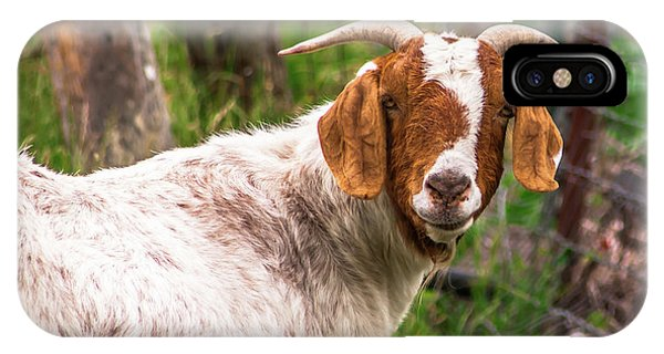 Nubian Goat Profile Sonoma County IPhone Case