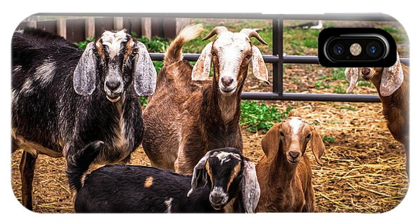 Nubian Goats Family Portrait IPhone Case