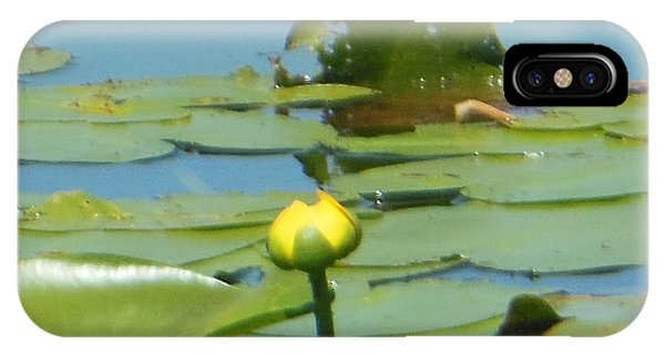 Nuphar Lutea Yellow Pond IPhone Case