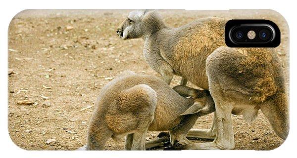 Kangaroo iPhone Case - Nursing Time by Mike  Dawson