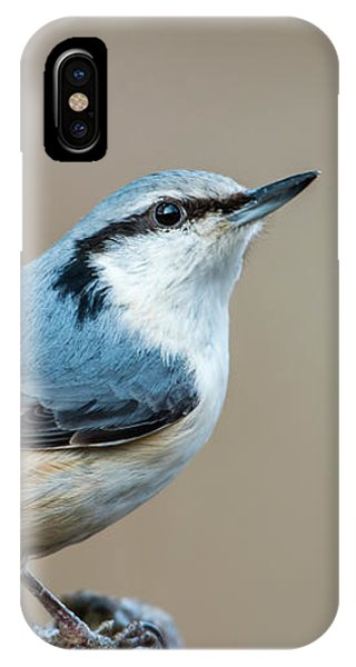 Nuthatch's Pose IPhone Case