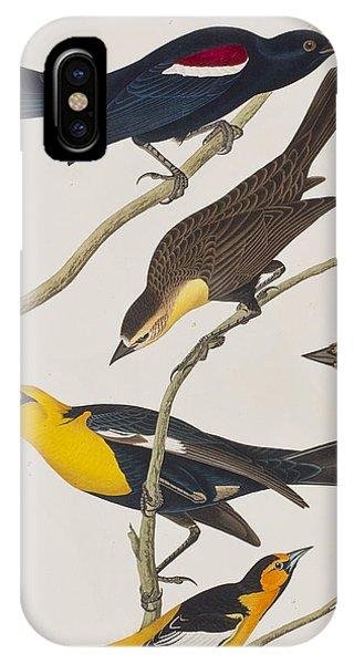 Starlings iPhone Case - Nuttall's Starling Yellow-headed Troopial Bullock's Oriole by John James Audubon
