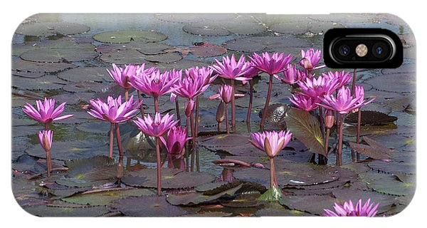 Nymphaea Water Lily Dthst0079 IPhone Case