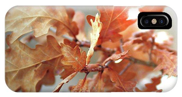 Oak Leaves In Autumn IPhone Case