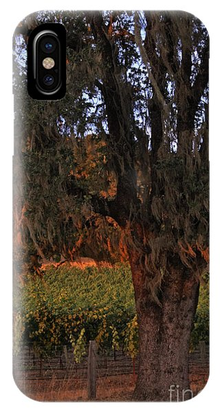 Oak Tree And Vineyards In Knight's Valley IPhone Case