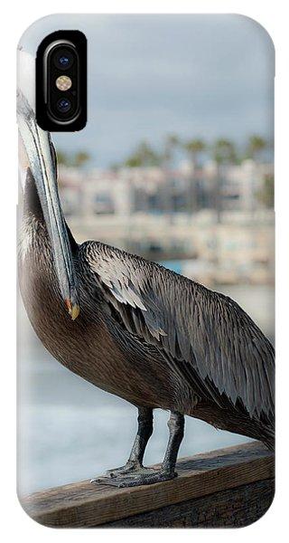 Oceanside Pelican IPhone Case