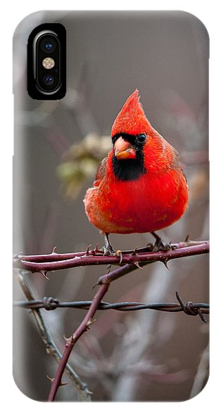Of Barbs And Thorns IPhone Case