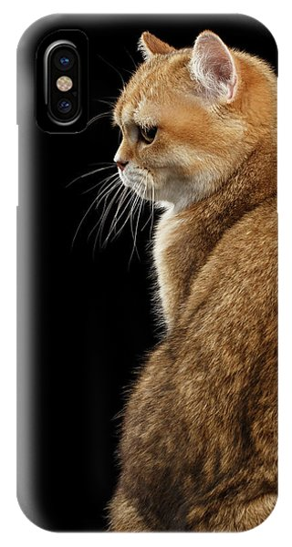 offended British cat Golden color IPhone Case