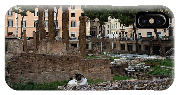 Umbrella Pine iPhone Case - Oh So Rome - Cats Umbrella Pines And Ancient Ruins by Georgia Mizuleva