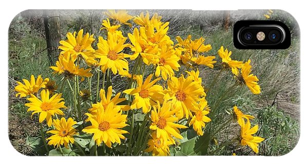Okanagan Sunflower 1 IPhone Case