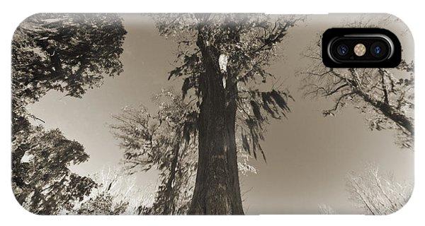 Cypress iPhone Case - Old Cypress Tree by Dustin K Ryan
