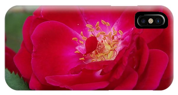 Old Homestead Rose IPhone Case