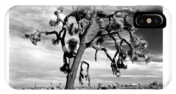 Fineart iPhone Case - Old Joshua Tree At Sunset. This Is One by Alex Snay