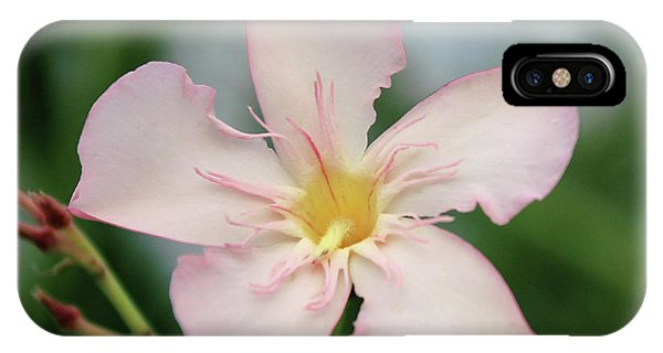 Oleander Agnes Campbell  IPhone Case