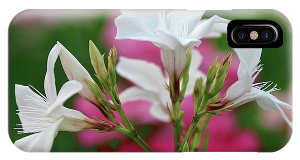 Oleander Casablanca 1 IPhone Case