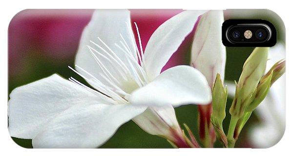 Oleander Casablanca 2 IPhone Case
