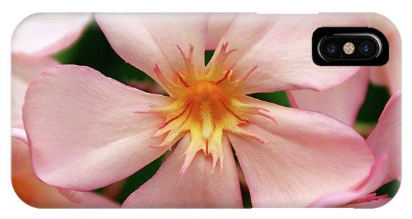 Oleander Dr. Ragioneri 1 IPhone Case