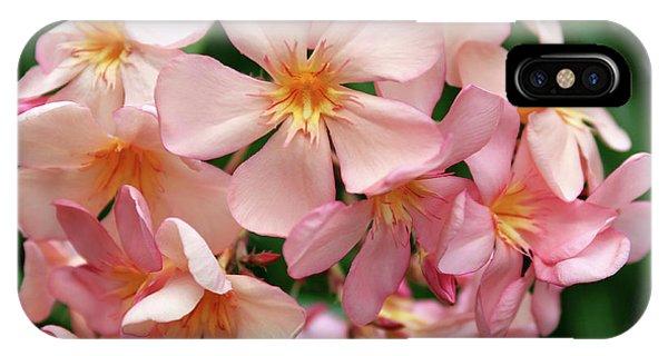 Oleander Dr. Ragioneri 3 IPhone Case