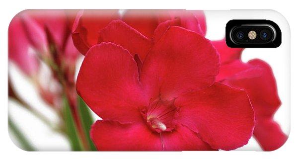 Oleander Emile Sahut 1 IPhone Case