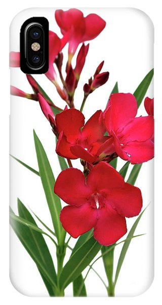 Oleander Emile Sahut 2 IPhone Case