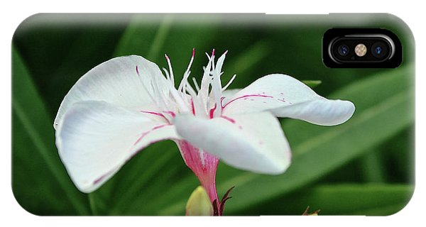 Oleander Harriet Newding  1 IPhone Case