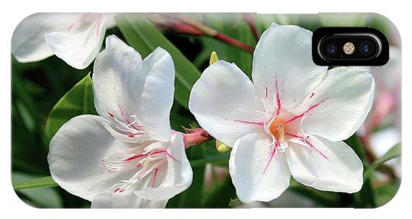 Oleander Harriet Newding 3 IPhone Case