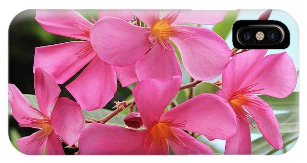 Oleander Maresciallo Graziani 1 IPhone Case