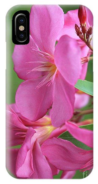 Oleander Maresciallo Graziani 2 IPhone Case