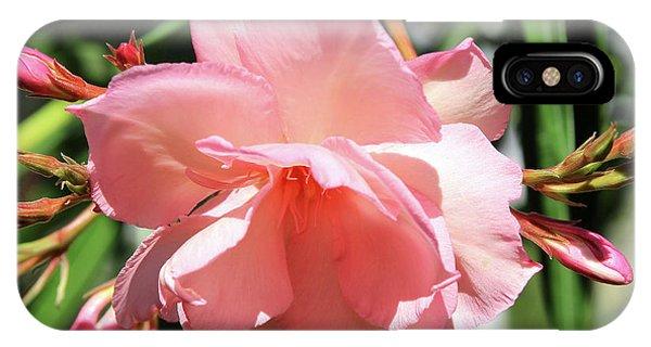 Oleander Mrs. Roeding 3 IPhone Case