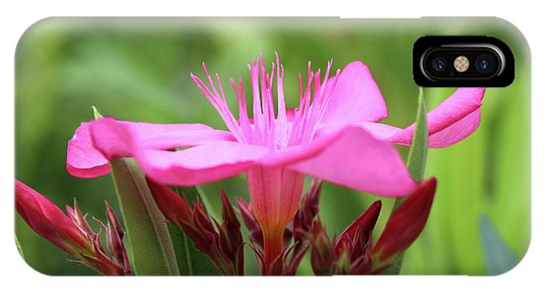 Oleander Professor Parlatore 1 IPhone Case