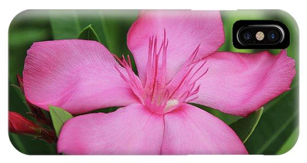 Oleander Professor Parlatore 2 IPhone Case