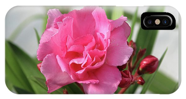 Oleander Splendens Giganteum 1 IPhone Case