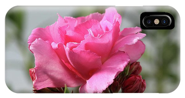 Oleander Splendens Giganteum 2 IPhone Case