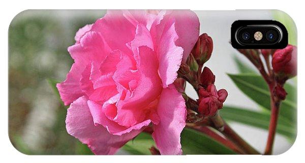 Oleander Splendens Giganteum 4 IPhone Case