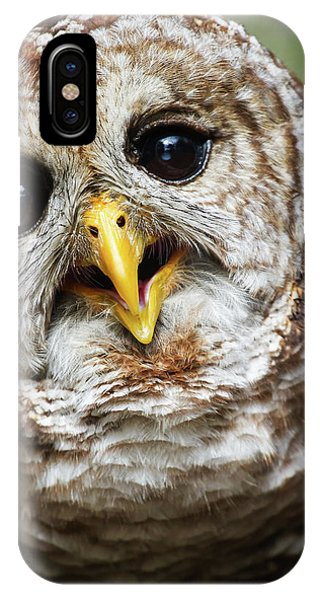 Oliver Owl IPhone Case